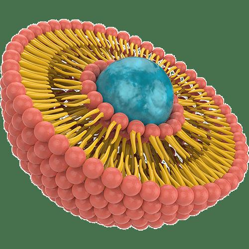 Liposomale Nahrungsergänzung Liposom